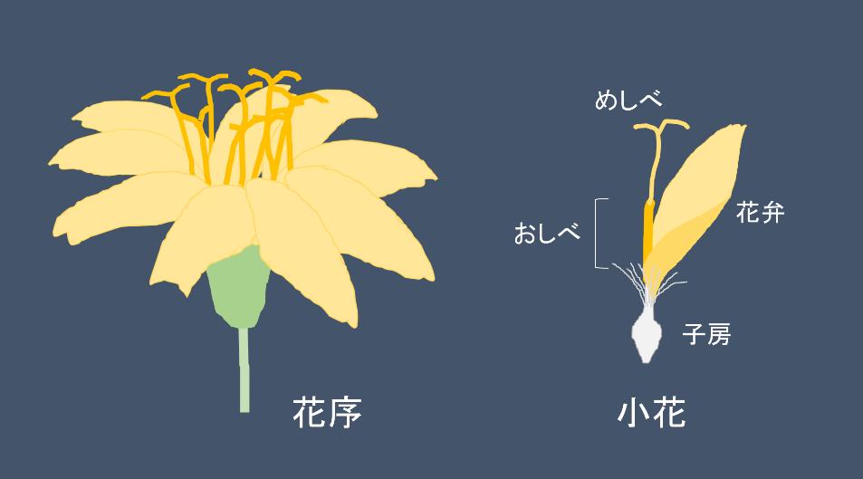 花弁 意味 twitter